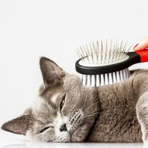 cat-toy2