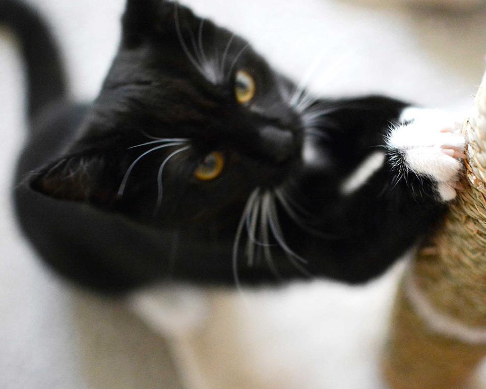 pets_image_cat