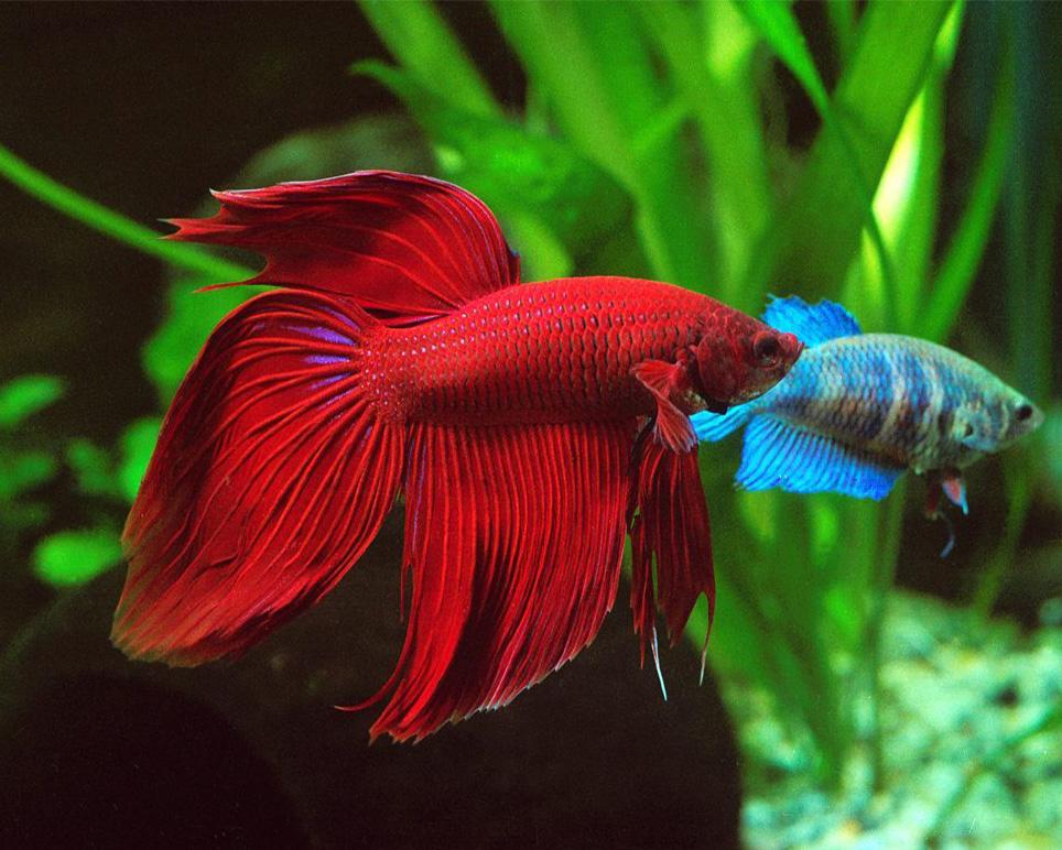 pets_image_fish
