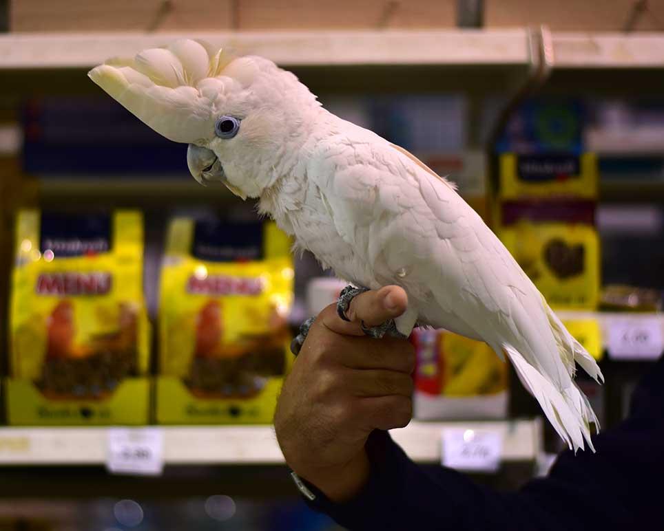 pets_image_bird