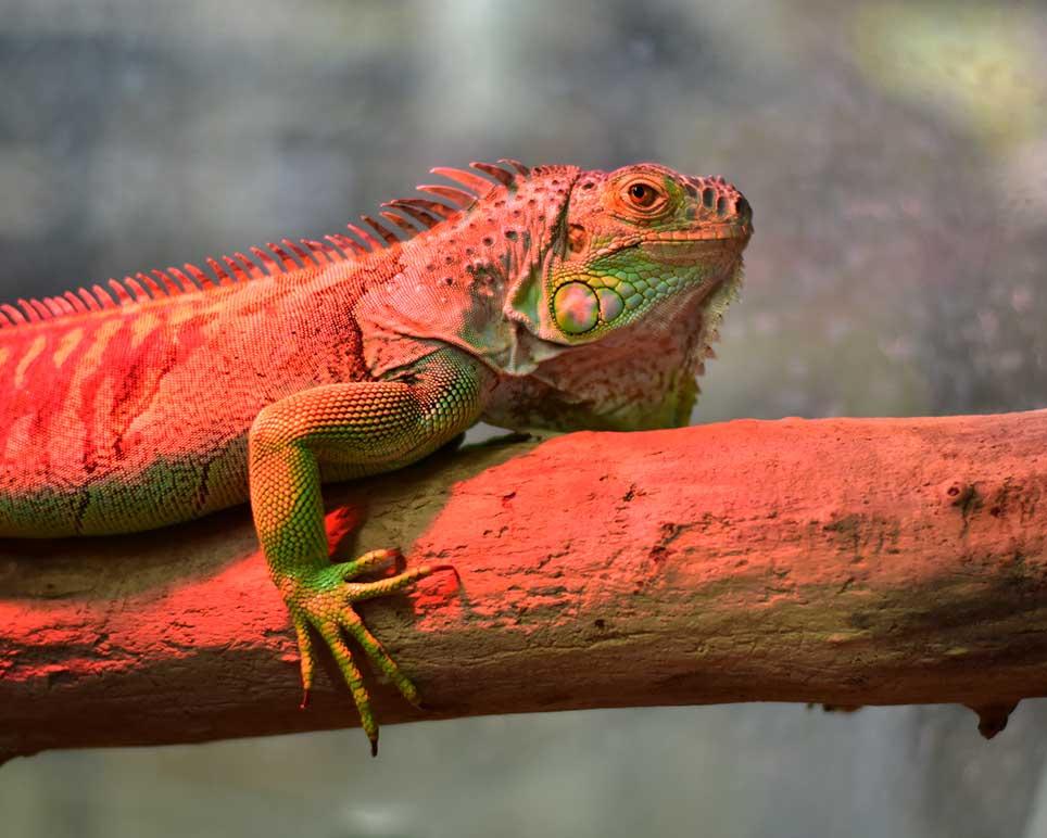 pets_image_reptiles